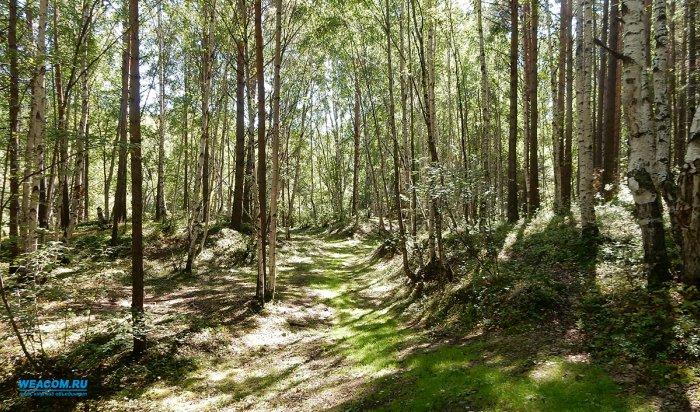 В Приангарье с 11 сентября отменяется режим ЧС, введенный из-за лесных пожаров