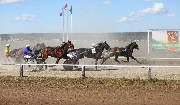 23 сентября пройдут ежегодные конные соревнования на призы губернатора Иркутской области