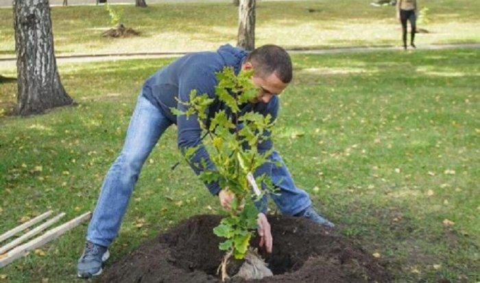 Акция «Моё дерево в моем городе» прошла в Иркутске