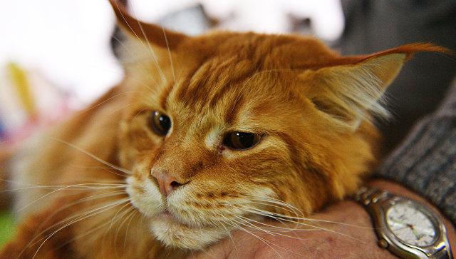 В России готовят законопроект о платной регистрации домашних животных