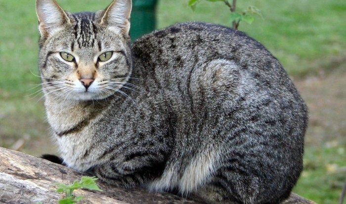 ВНижнем Новгороде бывшие супруги поделят кота через суд