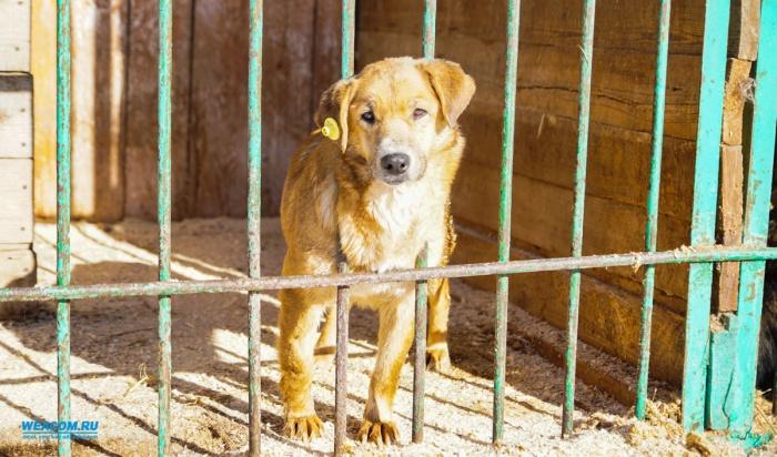В Иркутске стерилизованная и мертвая по документам собака ощенилась