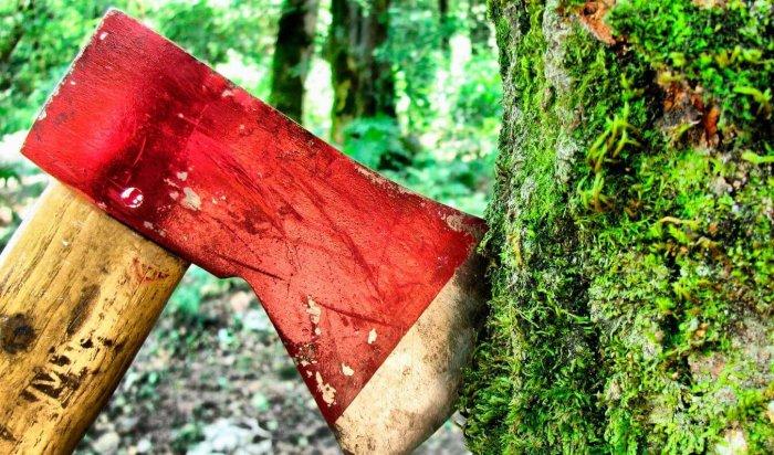 В Иркутской области задержаны 12 человек, незаконно вырубивших лес на 5 миллионов рублей (Видео)