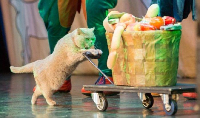 ВИркутске выступит Московский театр кошек Куклачева 29октября