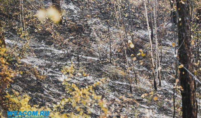 Площадь лесных пожаров в Иркутской области в 2017 году сократилась в 2,6 раза