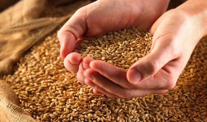 В Иркутской области в этом году будет собран рекордный урожай зерна