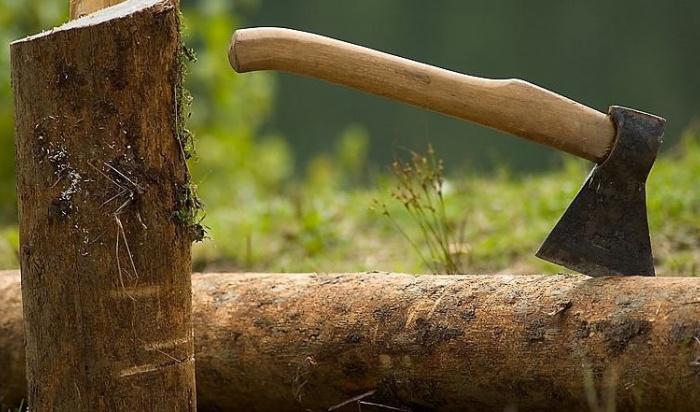 В Иркутской области осудят участника группировки, незаконно вырубившей лес на 17 миллионов рублей
