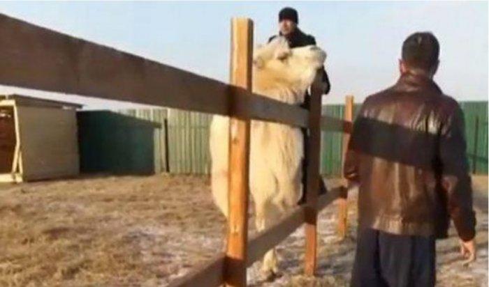 В приморском зоопарке посетители напали на животных