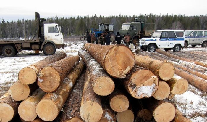 ВЧеремхово полицейские нашли группу нелегальных лесозаготовителей