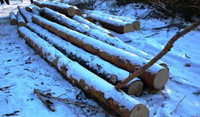 ВБоханском районе трое взрослых мужчин иподросток вырубили лес на90тысяч рублей