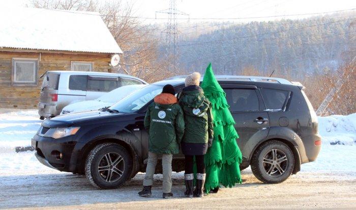 В Иркутской области лесные инспекторы проводят операцию «Ель»
