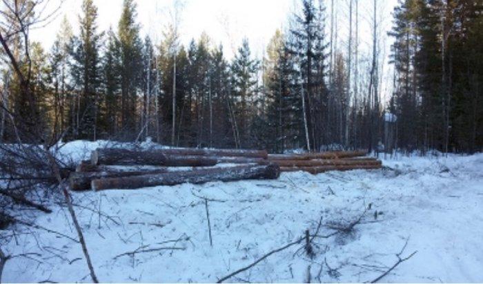 ВКрасноярске мужчина вырубил лес на150тысяч рублей