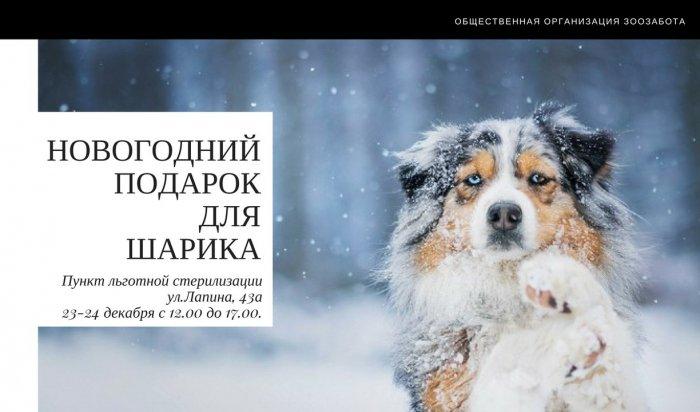 Жителей Иркутска приглашают принять участие в сборе помощи для животных в приютах