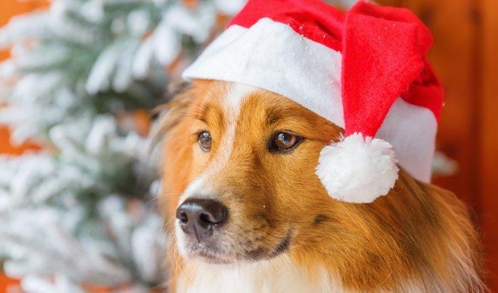 Как встретить наступающий год Желтой Собаки? Выбираем угощения, подарки и наряды