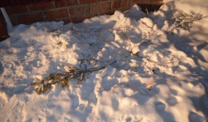Пьяный мужчина спилил сосну водворе дома жительницы Тельмы ипродал дерево своей соседке