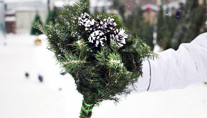Иркутский зоосад принимает новогодние елки на корм питомцам