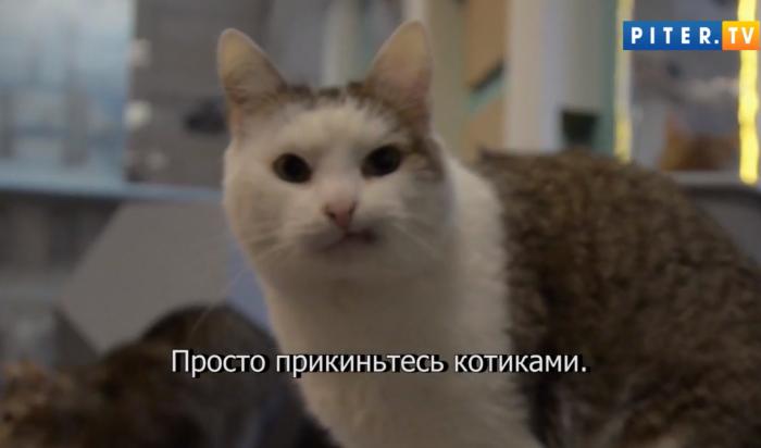 Крутим хвостами: Коты изПетербурга стали героями видео вподдержку ульяновских курсантов