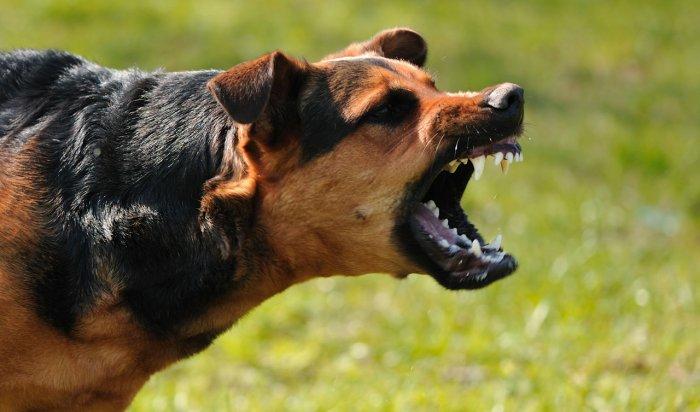 Вынесен приговор хозяину собак, которые насмерть загрызли ребенка в Вихоревке