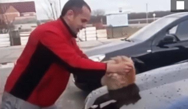 Житель Кубани  из мести помыл машину уличным котом