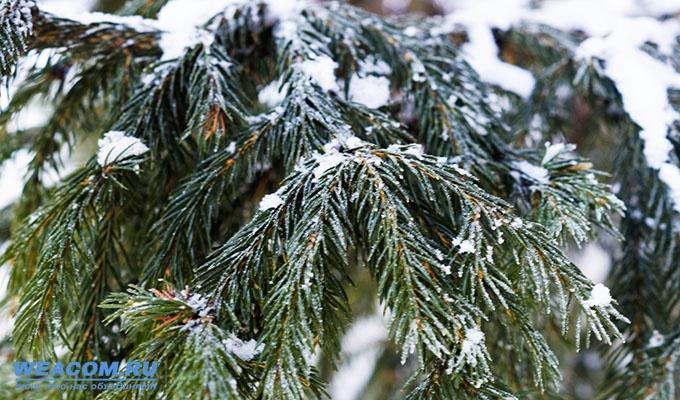 7 и 8 февраля в Иркутской области ожидаются усиление ветра, метели