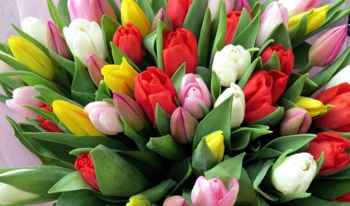 Более 80 тысяч цветов к весенним праздникам вырастили в иркутском МУПЭП «Горзеленхоз»