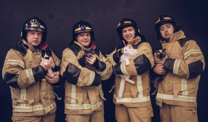 Иркутские пожарные приняли участие в фотосессии с котами