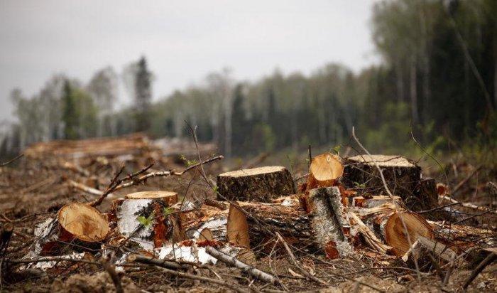 Житель Тайшета заплатил штраф в полмиллиона рублей за незаконную вырубку деревьев