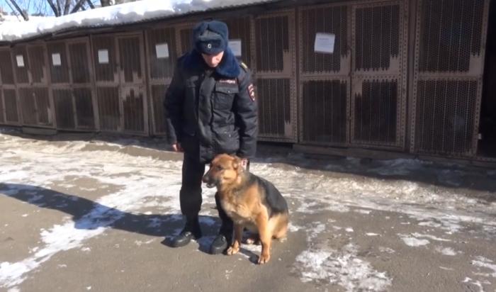 В Ангарске служебная собака по кличке Люта помогла раскрыть грабеж