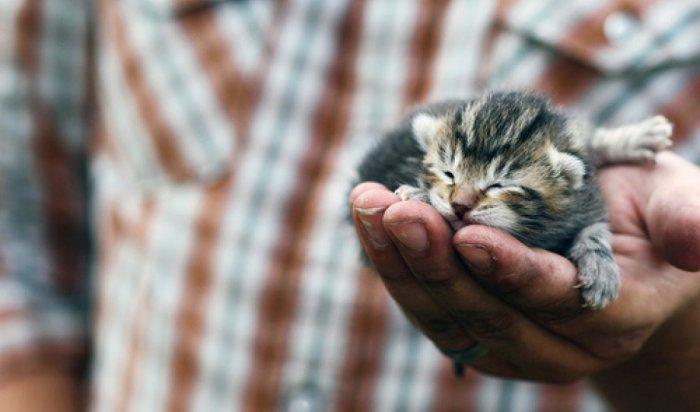Петербуржец сломал нос приятелю, который неподарил ему котёнка