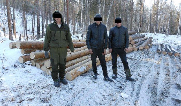 ВИркутском районе задержаны «черные» лесорубы