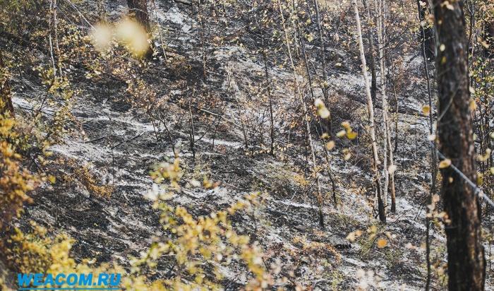 Первые лесные пожары вПриангарье могут начаться уже ссередины апреля