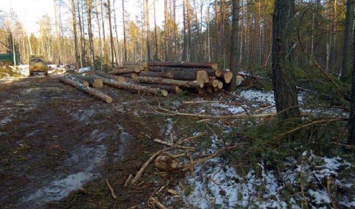 ВБалаганском районе группа черных лесорубов причинила ущерб на56млн рублей
