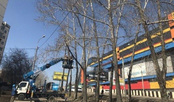 ВИркутске обрежут около пяти тысяч деревьев икустарников весной