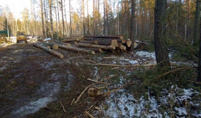 ВПриангарье будут судить организатора сообщества черных лесорубов (Видео)