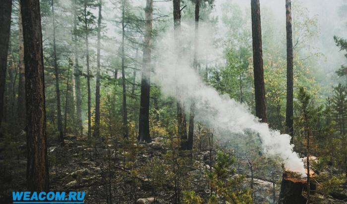 ВИркутской области ежедневно фиксируют поджоги сухой травы
