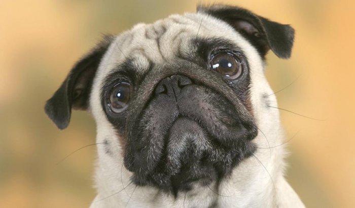 Жителя Шотландии оштрафовали за обучение пса нацистскому приветствию