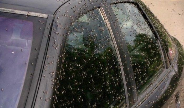 Жителей Воронежской области атаковали комары