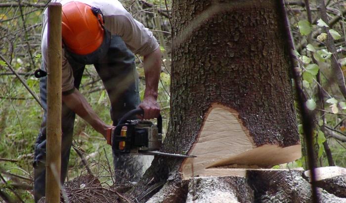 ВЗиминском районе задержали группу нелегальных лесозаготовителей