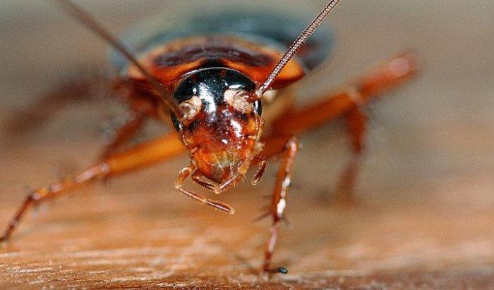 Ученые заставили тараканью ногу двигаться спомощью искусственного нерва
