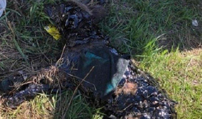 ВБратске удалось спасти щенка изямы сгудроном