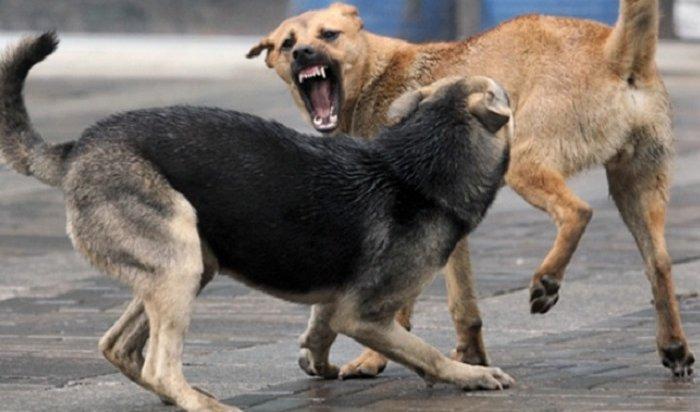 Бродячие псы атакуют домашних собак вмикрорайоне Луговом (Видео)