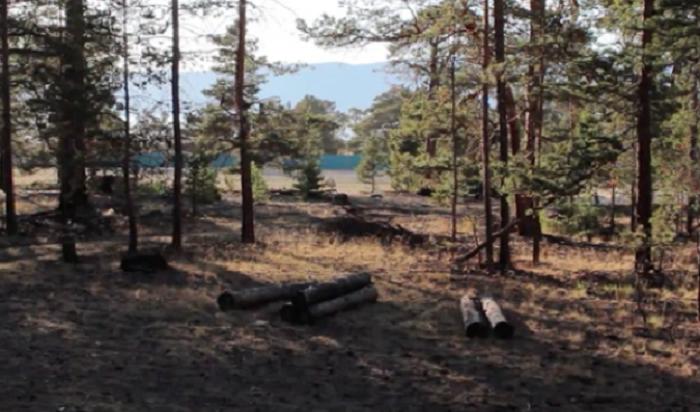 ВОльхонском районе собираются вырубить 15гектаров соснового бора