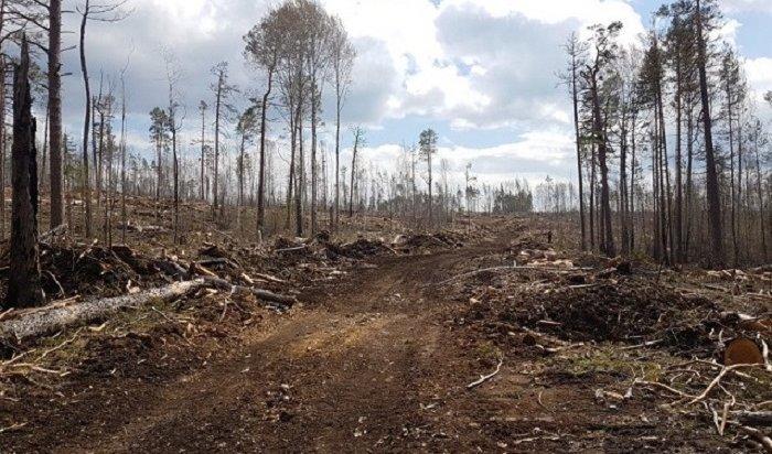 ВИркутской области нарубили реликтового леса на880млн рублей под видом санитарной очистки