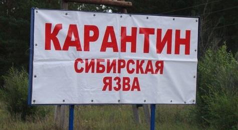 ВКиргизии 9человек попали вбольницу ссимптомами сибирской язвы