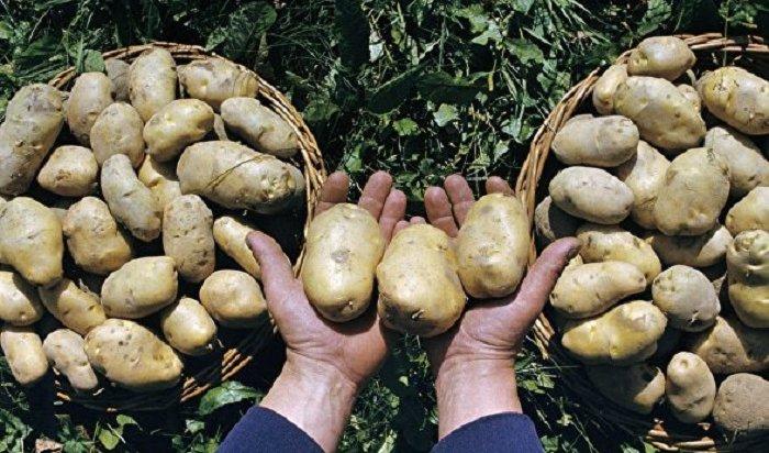 Россельхознадзор опроверг информацию озапрете сажать картошку надаче