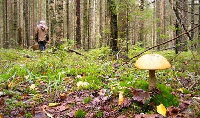 ВИркутске занесколько часов нашли пропавшего грибника