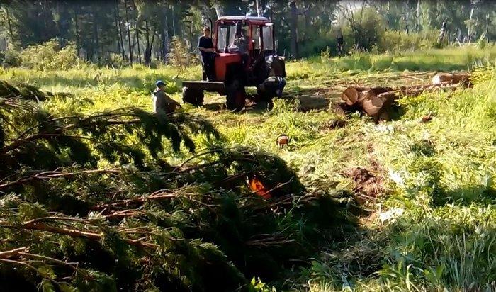 ВЗиминском районе лесники поймали споличным «черных лесорубов»