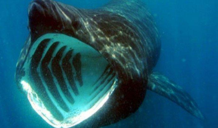 Воры вСША умыкнули изаквариума акулу иувезли еенадетской коляске (Видео)