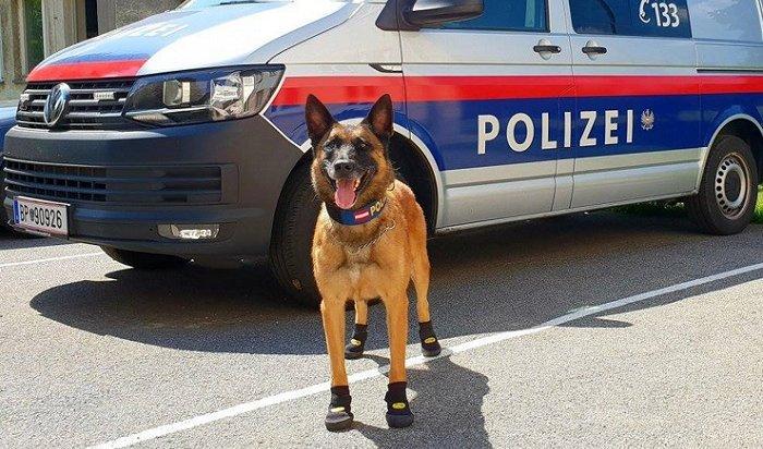 Полицейские собаки Европы теперь носят ботиночки