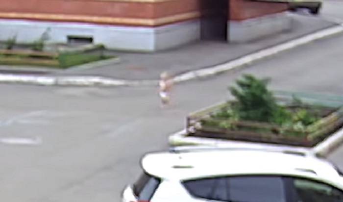 Побег малыша впамперсах изсадика вВологде попал навидео (Видео)